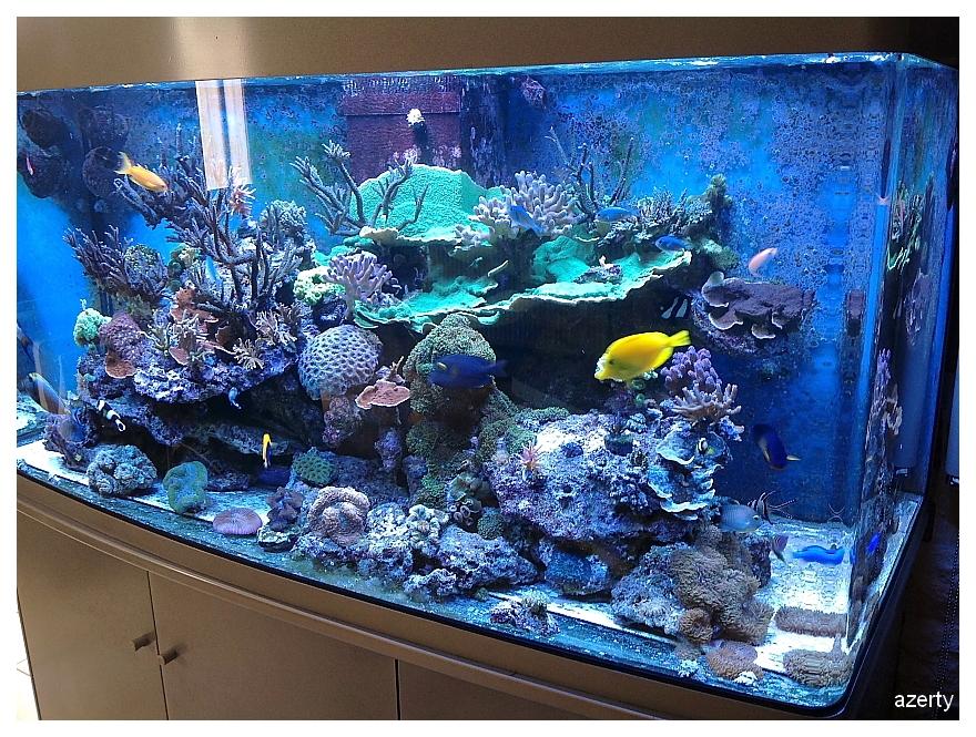 Aquarium arrondi for Achat aquarium complet
