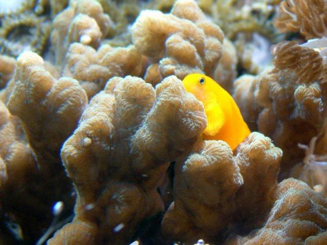 bubule_20110313182016-thumb.jpg