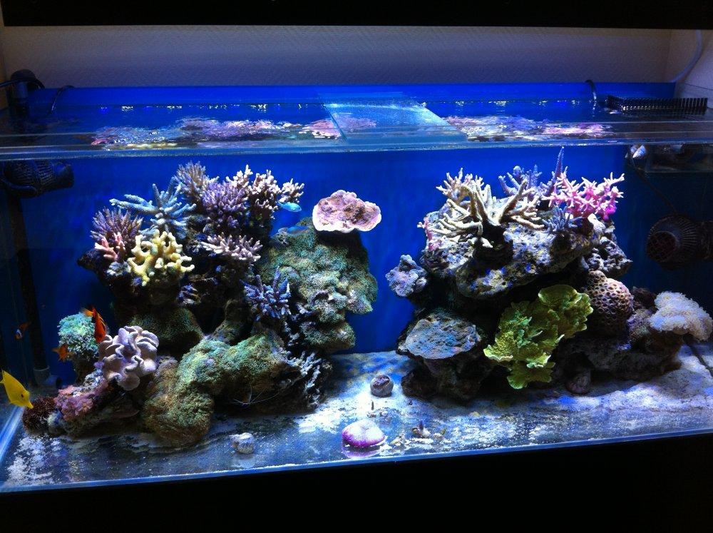 Aquarium eau de mer 240l for Aquarium de mer