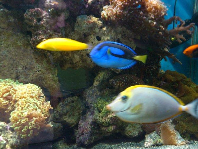 Le bac r cifal de bluerecif 2050l mon projet mon bac for Bac hopital poisson