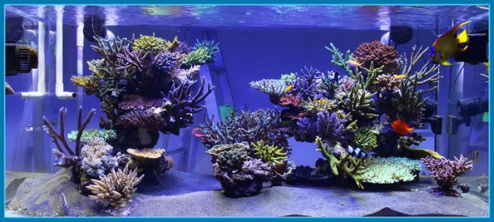 décor aquarium recifal