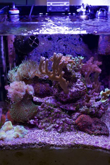 nano reef mix coraux