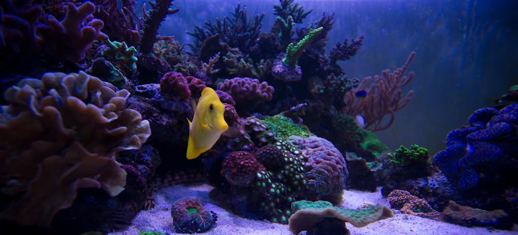 32 - Comme un poisson dans l'eau