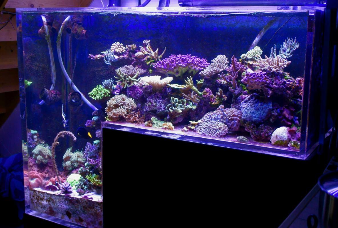Bac de nonopp4 ii 850 l page 53 mon projet mon bac for Bac hopital poisson