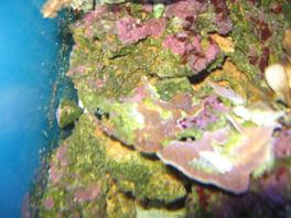 nécrose des coraux Post-986-0-96116200-1381661081