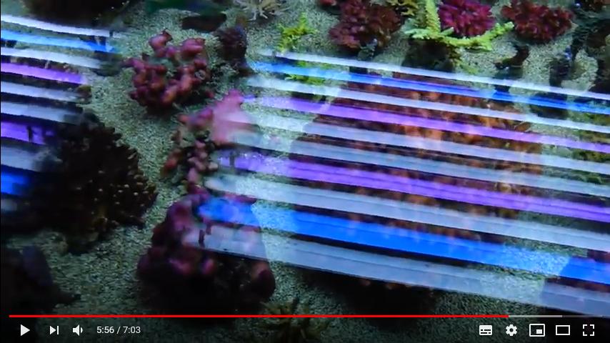 1184317726_Screenshot_2018-10-03SalesTankXmasSpecialSaleDezember2017-Korallenzuchtde-YouTube.png.05e65fa07797ed1086943245a5a1fc9e.png