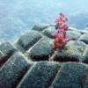 La magie des coraux révélée dans un time-lapse hypnotisant - dernier message par tobos