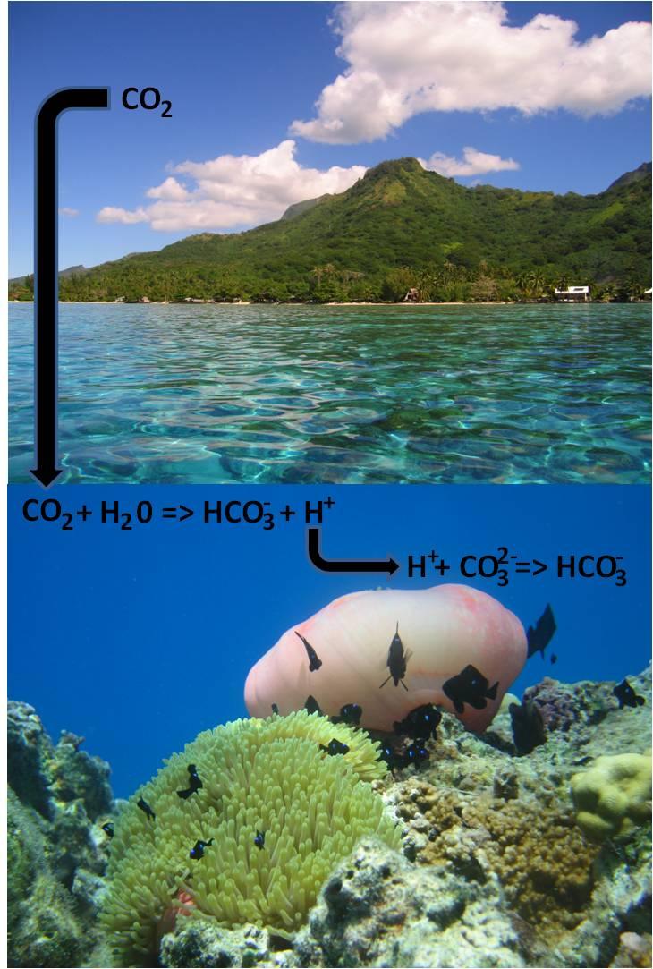 Conso CO2