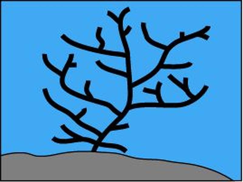 d-arborescent