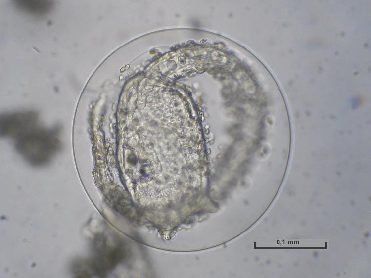 larve1.jpg