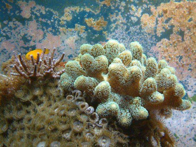 bubule_20110506184108-thumb.jpg