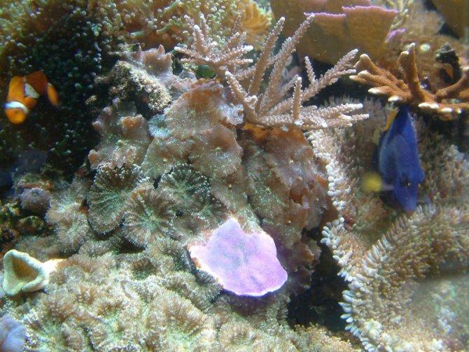 bubule_20110605144504-thumb.jpg