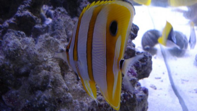 poissonexotique_20110722204422-thumb.jpg