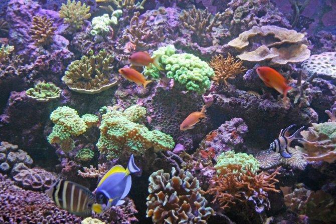 bruno30_20120627135022-thumb.jpg