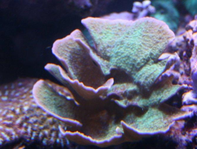 bruno30_20120820143742-thumb.jpg