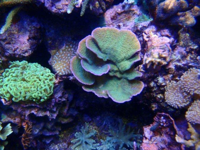 bruno30_20120910180856-thumb.jpg