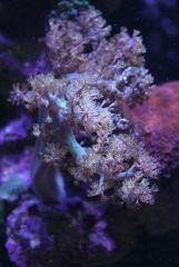 Qui peut identifier ce corail?