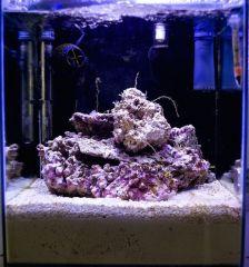 Nano DSB reef