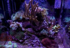 nano reef 2 ans