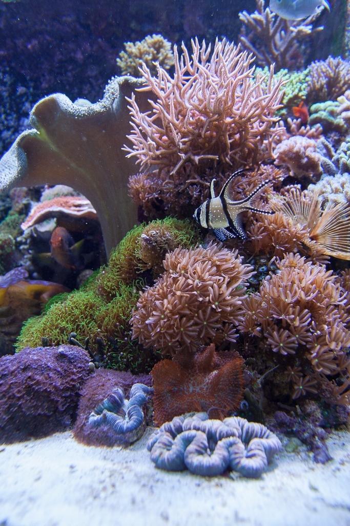 22 - Diversity Reef