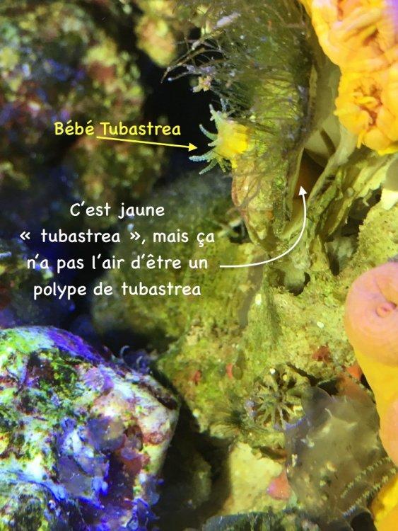 huitre_jaune_?_.JPG